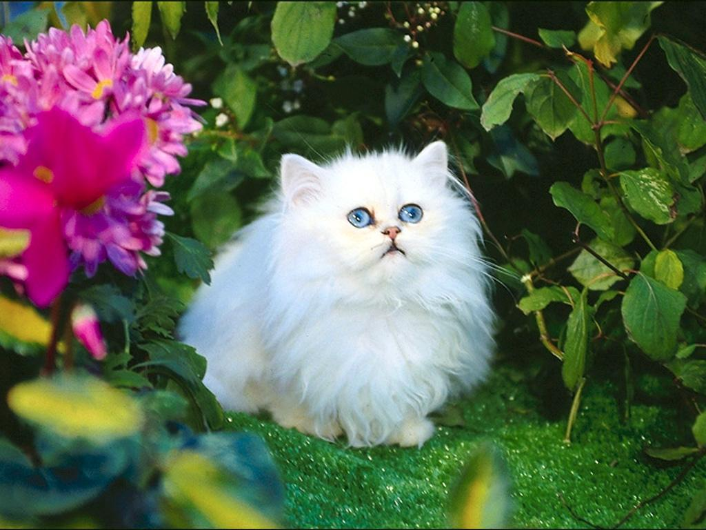 white+cat+in+flowers Rabbit Mobile Home Park River on stone mobile homes, white mobile homes, school mobile homes, landscape mobile homes, woods mobile homes, wind mobile homes, coast mobile homes, house mobile homes, columbia mobile homes, california mobile homes, lily mobile homes, dog mobile homes, land mobile homes, garden mobile homes, urban mobile homes, clay mobile homes, tower mobile homes, rock mobile homes, lake mobile homes, sand mobile homes,