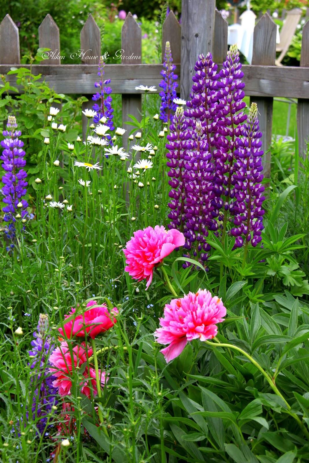 Beautiful flowers garden house - Aiken House Amp Gardens Early Summer Garden