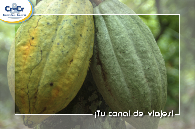 Cacao Republica Dominicana