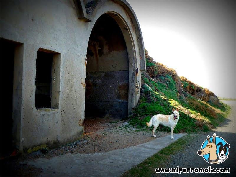 Can de Palleiro en la Batería Militar de Seixo Branco Ruta