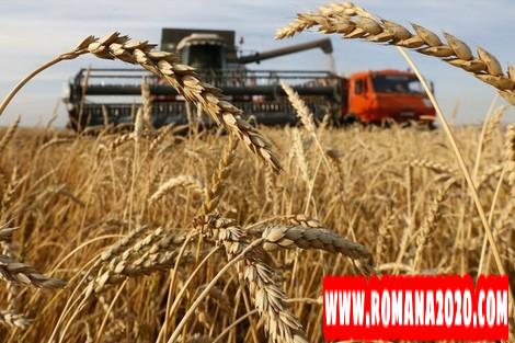 أخبار المغرب ضعف محصول الحبوب يستنزف رصيد المملكة من العملة الصعبة