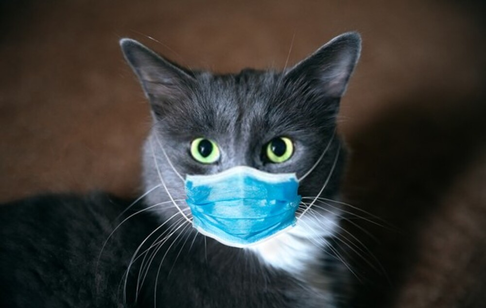Can Cats get Coronavirus COVID-19? from humans