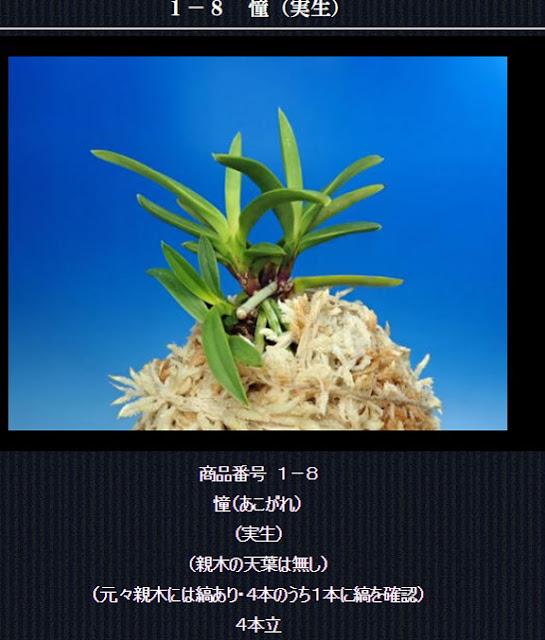 http://www.fuuran.jp/1-8html