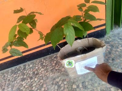 SHALY Bogor, Jabar  Pembeli Bibit Bunga Melati Belanda