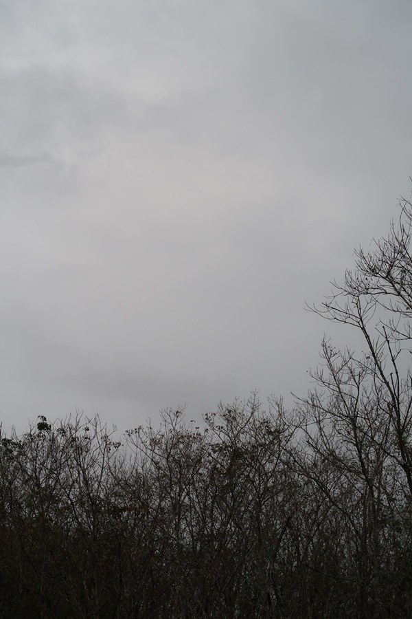 Gambar pokok kering tiada daun
