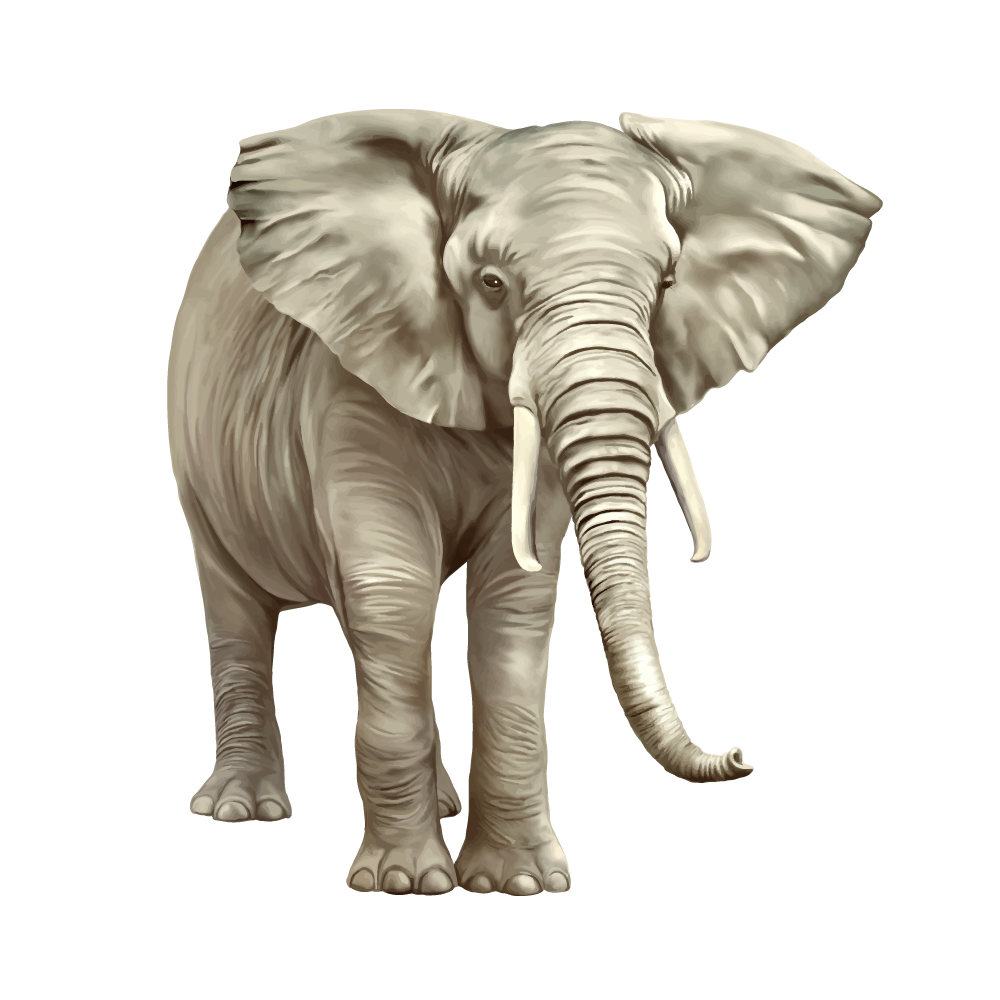 Elephant Transparent Image You can download in a tap this free elephant face transparent png image. elephant transparent image