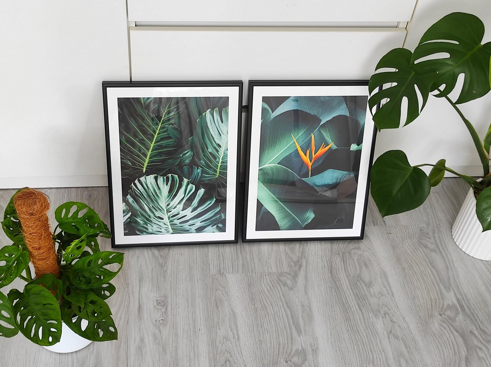 Plakat botanika