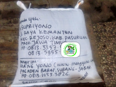 Benih Padi Pesanan  H. SUPRIYONO Pasuruan, Jatim.  (Setelah Packing).