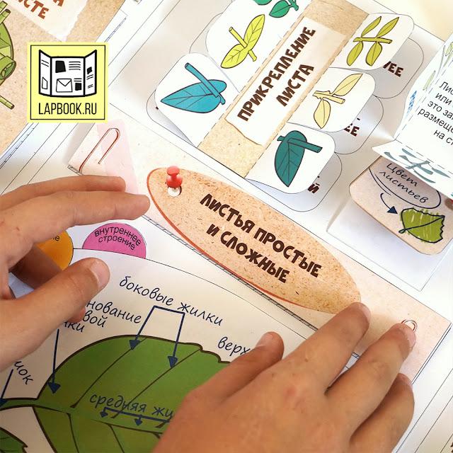 лэпбук про листья для детей файлы для распечатки