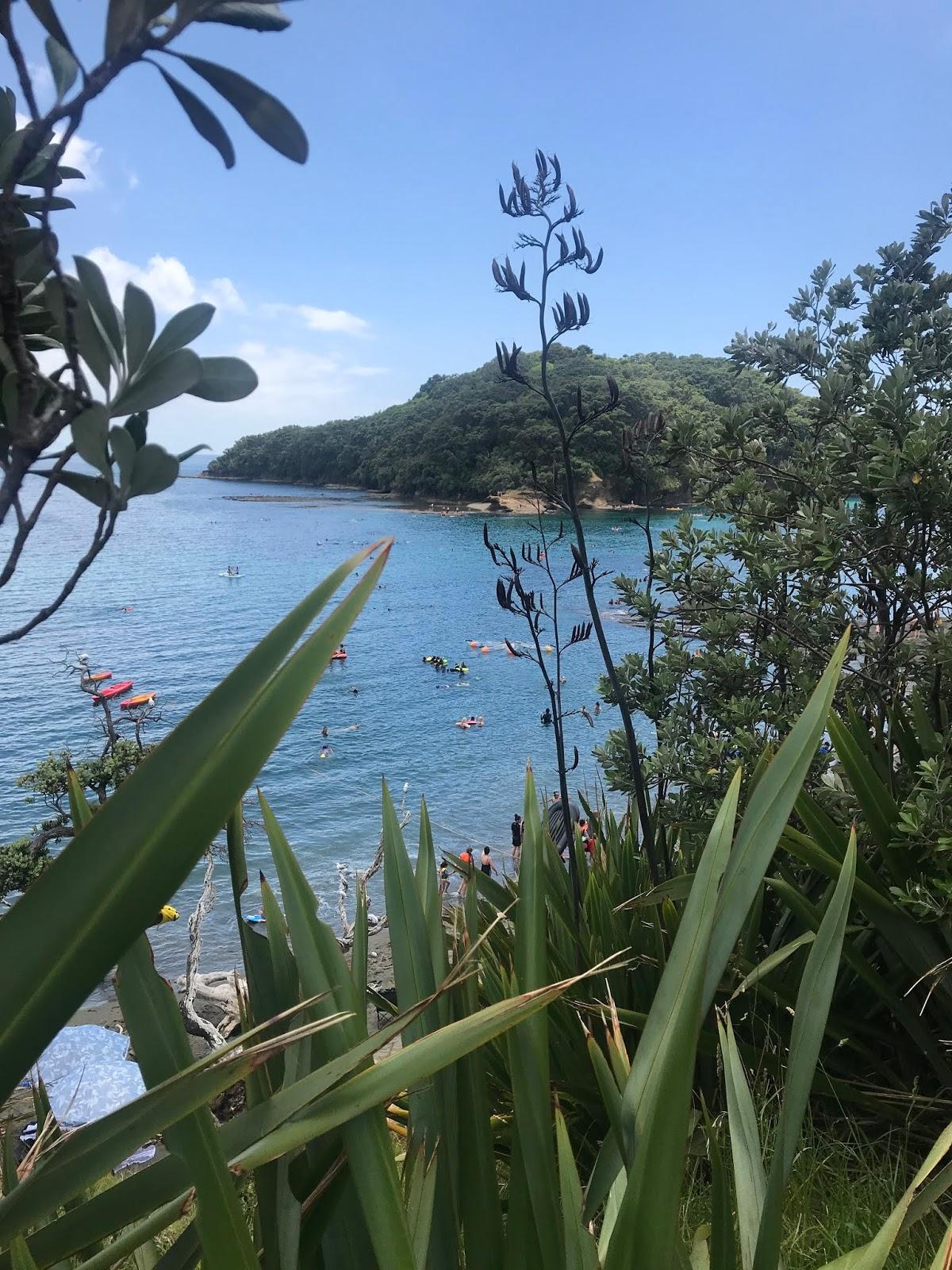 Goat Island, Auckland