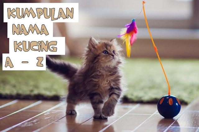 Daftar Nama Kucing yang Keren
