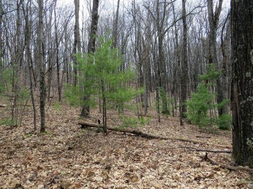 ridge through trees
