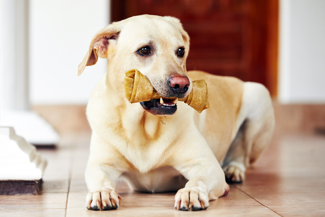 Dentystyczne przysmaki dla psa
