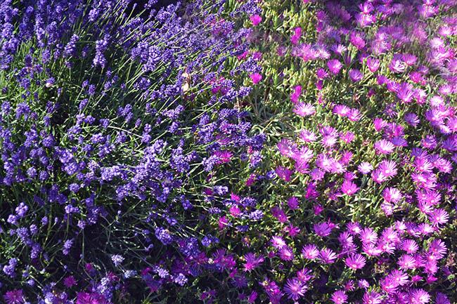 Luisa Bernasconi il colore viola