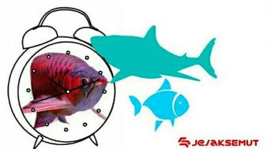 waktu mancing ikan patin terbaik