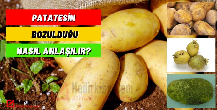 Patatesin Bozulduğu Nasıl Anlaşılır? Bozulmuş Patatesin Zararları!