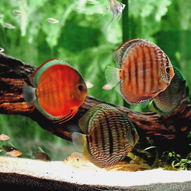 fish aquarium captions for instagram