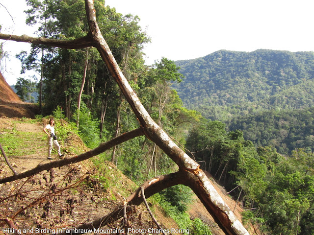 Birdwatching in Tambrauw forest of Indonesia