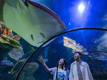 Enjoy Sensation Like Underwater Enchantment at Seaworld Indonesia