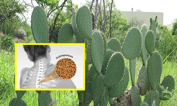 ¿Qué alimento evitaría la osteoporosis en mexicanas?