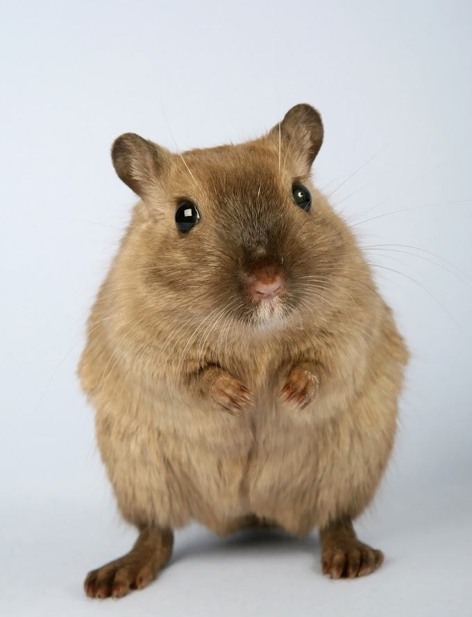 10 Facts About Hamsters - Fun and Helpful Info