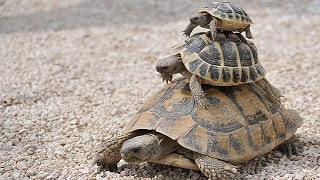 adoptar tortuga de florida