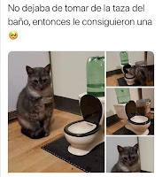 invento para gatos humor
