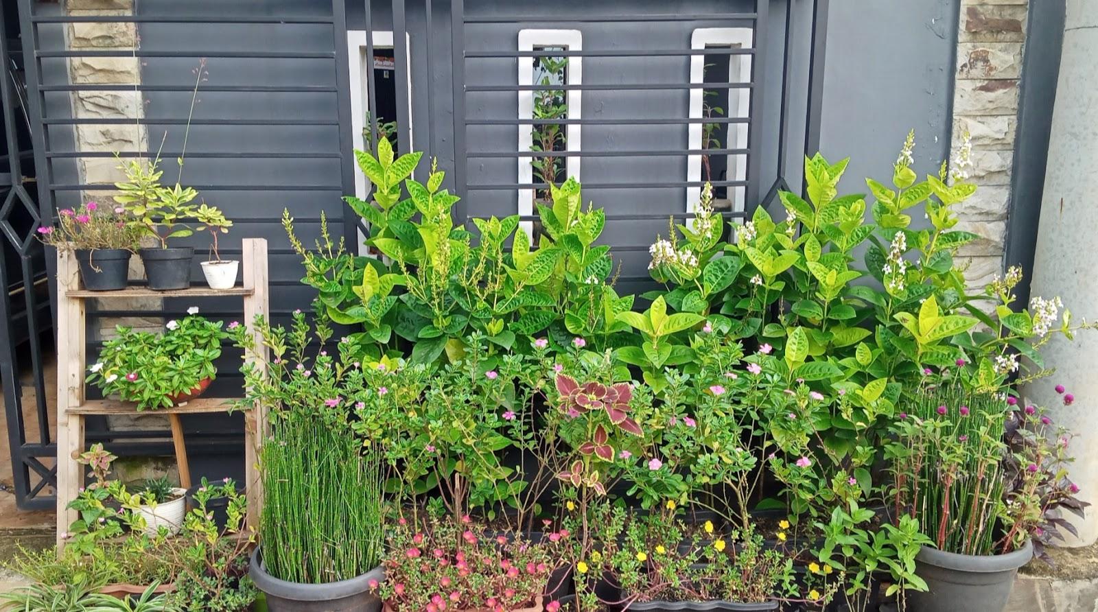 Halaman Samping Tancap Tumbuh Berbunga Ini 17 Jenis Tanaman Hias Gampang Ditanam
