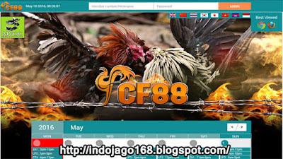 http://indojago168.blogspot.com