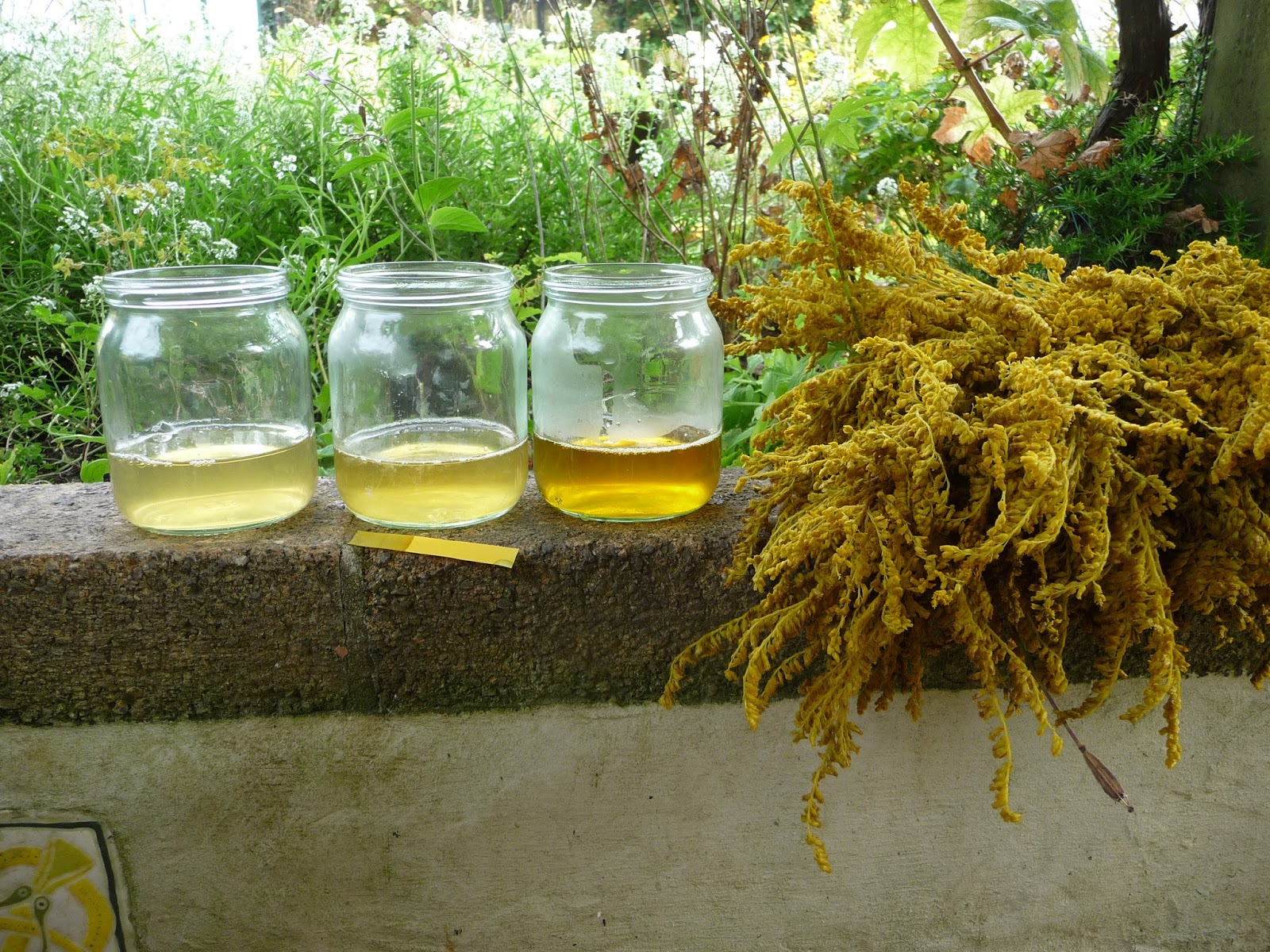 Wool - Tribulations of Hand Spinning and Herbal Dyeing: Goldenrod