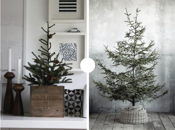 Potted Christmas Tree Wednesday November 28 2017