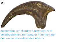 http://sciencythoughts.blogspot.co.uk/2016/02/boreonykus-certekorum-new-species-of.html