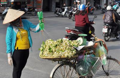 Hoa bưởi rong ruổi trên khắp các phố phường
