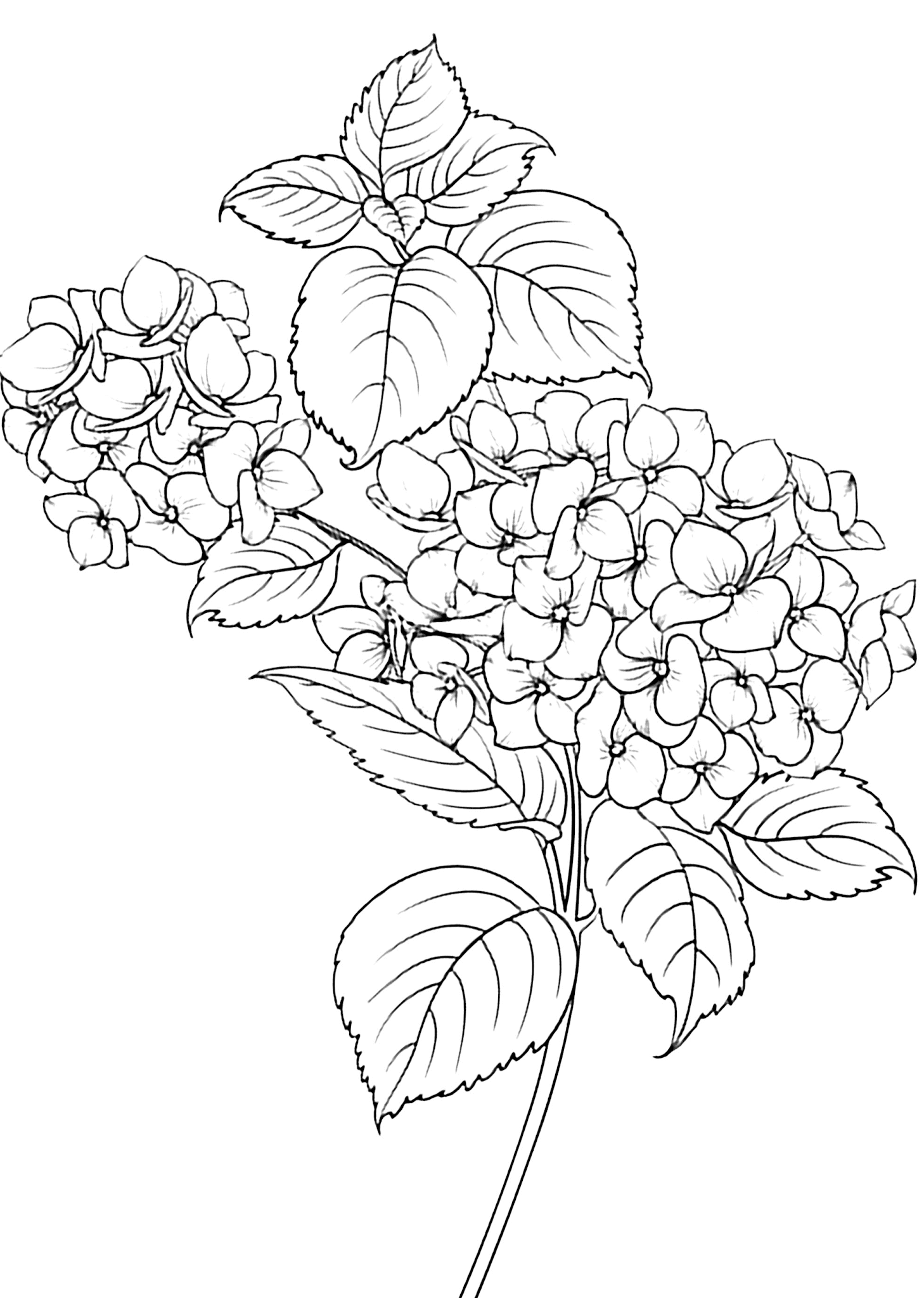 Gambar Mewarnai Bunga Untuk Anak PAUD dan TK