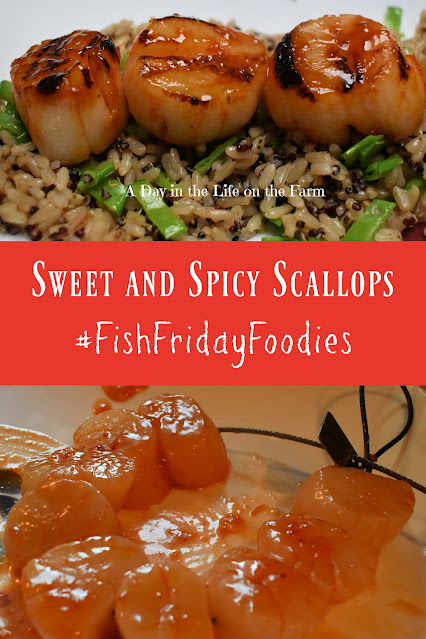 sweet and spicy scallops pin