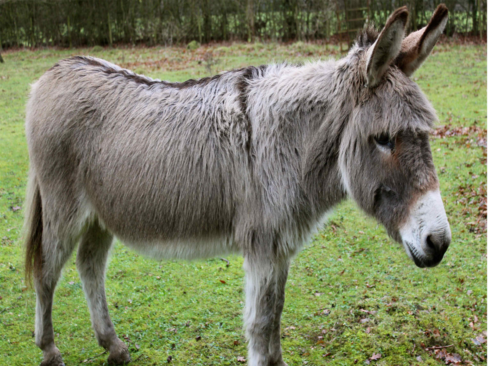 donkey pictures free download