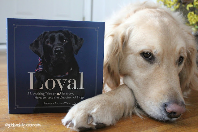 Loyal Book review about heroic dogs