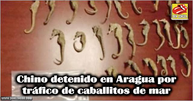 Chino detenido en Aragua por tráfico de caballitos de mar