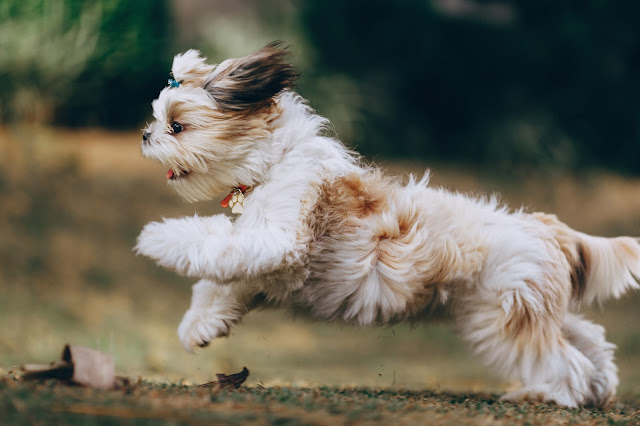Rules and tips for walking dogs
