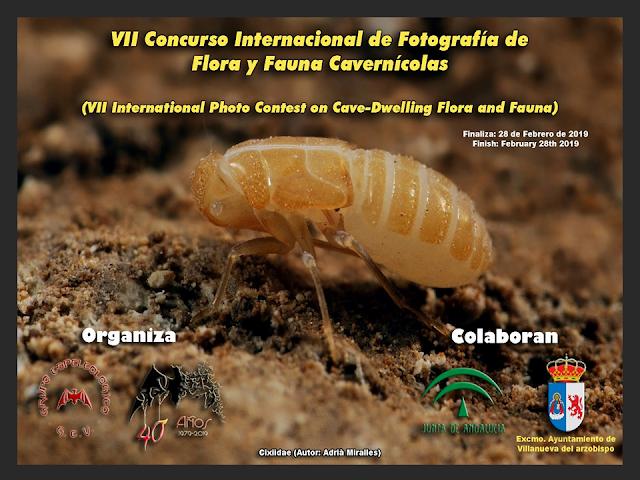 https://bioespeleologia.blogspot.com/2018/12/vii-concurso-internacional-de.html