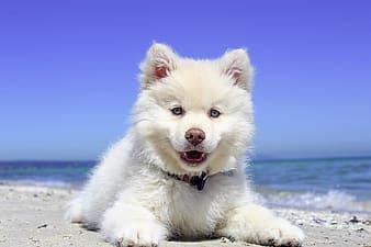 A Dog In Sunbathe