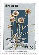 Selo Eremanthus sphaerocephalus Baker