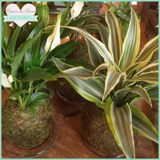 Plantas naturales sin maceta de VERDEARTE-By Ana Oval-8