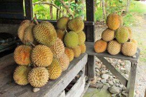 Tips Memilih Durian Yang Baik dan Enak