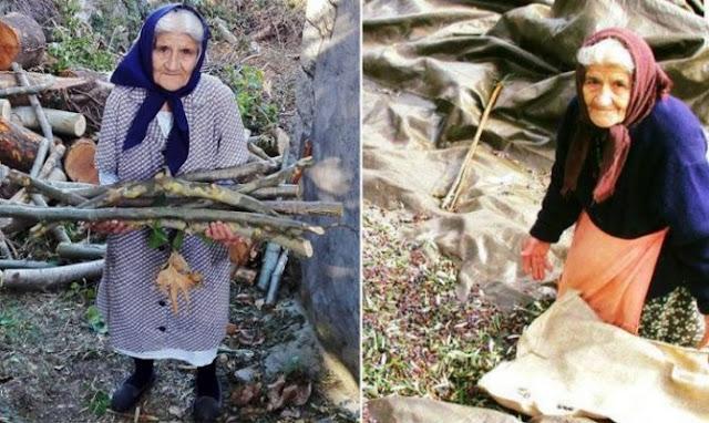 92 ετών η γιαγιά Αιμιλία από την Πελοπόννησο και μαζεύει ελιές και ξύλα μόνη της