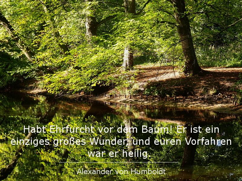 Lebenslilie 25 Zitate über Bäume