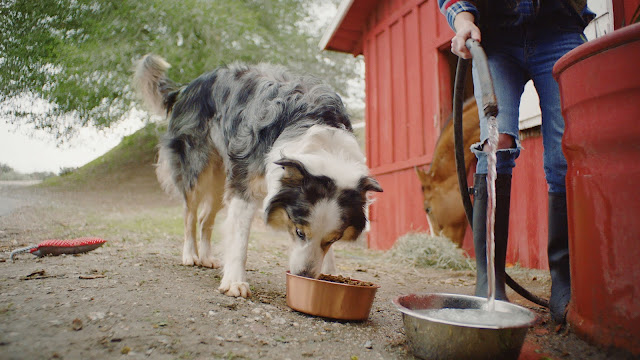 Not all pets in need are found in shelters. PetSmart® Buy a Bag Give a Meal™ will help.