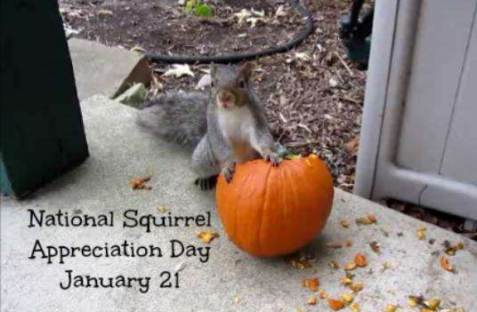 National Squirrel Appreciation Day Wishes Images
