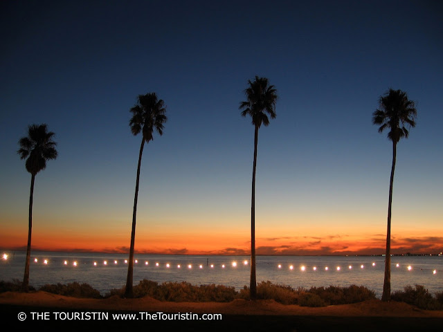 Four palm trees in a row illuminated by fairy lights and the orange sunset over the ocean.