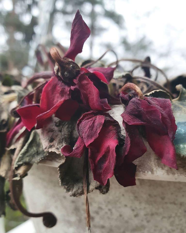 kuihtunut kukka